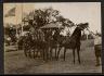 John N.Teunisson / Three horse hitch / First half of the twentieth century
