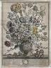Henry Fletcher / Twelve Months of Flowers:  March / 1730