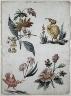 Giacomo Cavenezia / Floral Designs with Two Birds / 1774