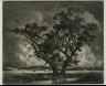 George Elbert Burr / Old Cottonwoods, Colorado / ca. 1920