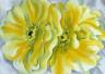 Georgia O'Keeffe / Yellow Cactus Flowers / 1929