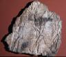 Artist not recorded / Relief of Assyrian soldiers / reign of Sennacherib, 704-681 B.C.