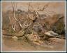 Samuel Colman / Sycamore Canyon / 1888