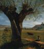 Pierre Jean Boquet / Pollard Willow / c. 1800