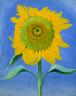 Georgia O'Keeffe / Sunflower, New Mexico, I / 1935
