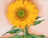 Georgia O'Keeffe / A Sunflower from Maggie / 1937