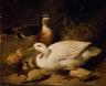 John Frederick Herring, Sr. / Ducks and Ducklings / 1850