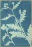 Anna Atkins / Thistle (Carduus acanthoides) / 1851-54