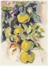 Karl Schmidt-Rottluff / Quinces / 1930/1933