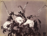 Adolphe Braun / Roses / 1860s