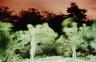 Jerry Burchard / Ko Samet, Dancing Trees / 1985