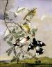 Copy after John James Audubon / Rose-Breasted Grosbeak / n.d.