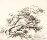 George Elbert Burr / Sketch for Pines in Wind, Estes Park / 1918