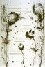 Jim Dine / Eleventh plate in the portfolio Biotherm (for Bill Berkson) by Frank O'Hara (San Francisco: Arion Press, 1990) / 1990