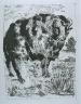 """Pablo Picasso / """"Le bélier (The Ram),""""   in the book Histoire naturelle:  Picasso eaux-fortes originales pour  les textes de Buffon (Picasso's Original Etchings for Buffon's Text)  (Paris: Martin Fabiani, 1942) / 1936"""