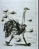 """Pablo Picasso / """"L'autruche (The Ostrich),""""  in the book Histoire naturelle:  Picasso eaux-fortes originales pour les textes de Buffon (Picasso's Original Etchings for Buffon's Text)  (Paris: Martin Fabiani, 1942) / 1936"""