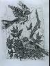 """Pablo Picasso / """"Le chardonneret (The Goldfinch ),""""  in the book Histoire naturelle:  Picasso eaux-fortes originales pour les textes de Buffon (Picasso's Original Etchings for Buffon's Text)  (Paris: Martin Fabiani, 1942) / 1936"""