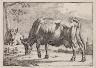 Paul Potter / Cattle / n.d.