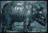 Albrecht Dürer / Rhinoceros / 1515
