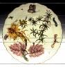 Chelsea factory / Botanical Plate / circa 1755