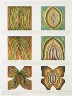 Judy Chicago / Rejection Breakthrough Drawing, from the Rejection Quintet / 1974