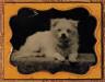 Unidentified Photographer / Small white dog / ca. 1858