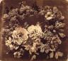 Adolphe Braun / Camelias and Lilacs / 1856