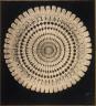Frederick H. Evans / Tr. Sec. Spine of Echinus. X40 / 1887