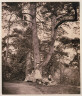 Major Francis Gresley / Group of Firs / ca. 1861-1865