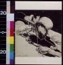 Oliver Herford / The ant / 1899?