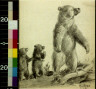Will James / Echo Mountain grizzly / 1921