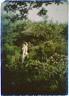 Arnold Genthe / Miss Jordan in Bush's garden / 1913