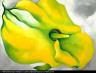 Georgia O'Keeffe / Yellow Calla / 1926