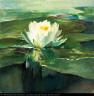 John La Farge / Water Lily in Sunlight / ca. 1883