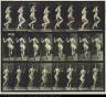 Eadweard Muybridge / Woman Ricochetting on One Foot, from the book Animal Locomotion / ca. 1887