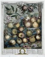 Twelve Months of Fruit: May