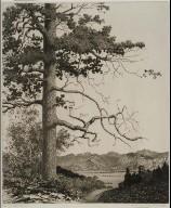 Old Pine, Estes Park