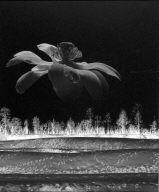Flower over Landscape