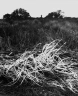 Dry Weeds by Beach