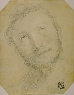 Head of Bearded Man Looking Upwards