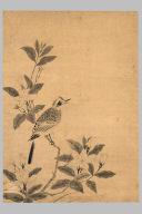Bird on a Gardenia Branch