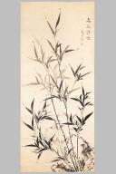 Bamboo in Mist