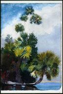 Palm Trees, Florida