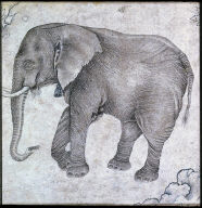 Elephant in Landscape: Middle view