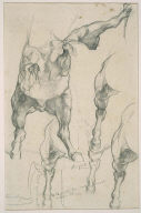 "Anatomical Studies of a Horse for ""Automedon with Horses of Achilles"""