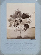 Study of a Squash and Vines on a Table