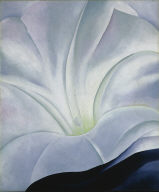 Morning Glory with Black, No. 3 (White Flower)