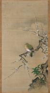 Pigeon in Plum Tree