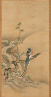 Long-tailed Bird in Chinese Rose Tree