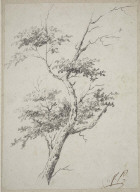Sketch of a tree